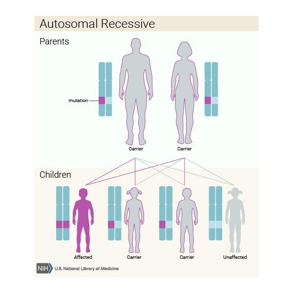 Autosomal Recessive gene